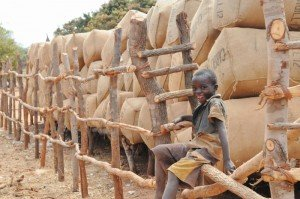 boy on cotton bails | Connect Africa | image