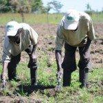 Kutenda Farms | Connect Africa | image